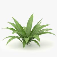3d model asplenium scolopendrium plants