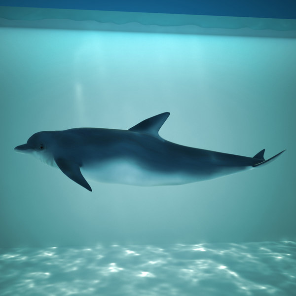dolphin animation flippers 3d max