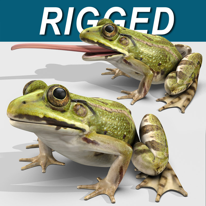 green frog max