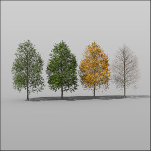 3d plant tree medium hazel