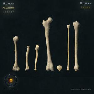 3d human limb bones