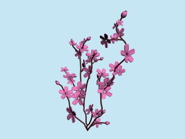 branches cherry blossom tree 3d ma