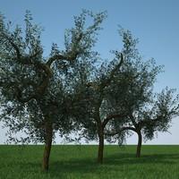 3d model olive trees