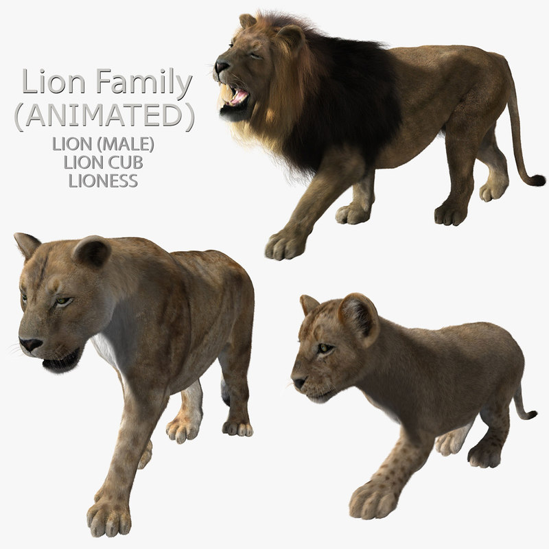 maya lions family fur animations
