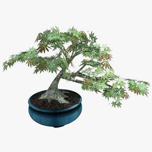 3d model potted bonsai tree