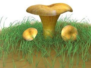 3dsmax cantharellus cibarius mushroom