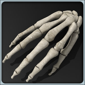 obj anatomical hand skeleton