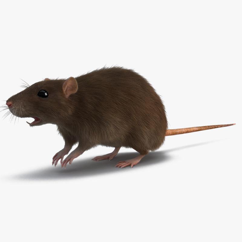 3d rat fur
