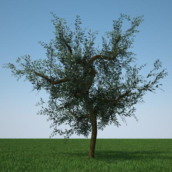 olive tree 3d c4d