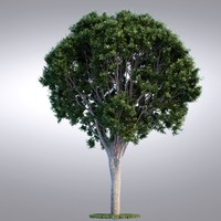 HI Realistic Series Tree - 008