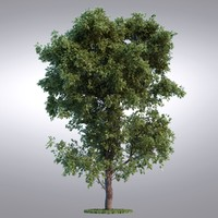 HI Realistic Series Tree - 093