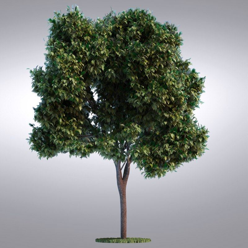 hi realistic series tree 3d model