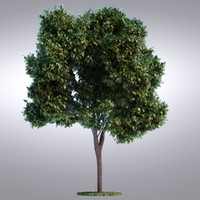 HI Realistic Series Tree - 094