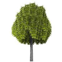 3ds pc tree