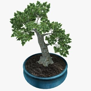 bonsai tree 3ds