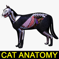 cat anatomy 3d 3ds