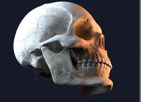 blend jaw skull