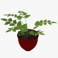 3dsmax potted fern plant