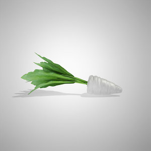 3d model radish white