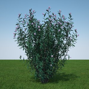 plant flowers obj