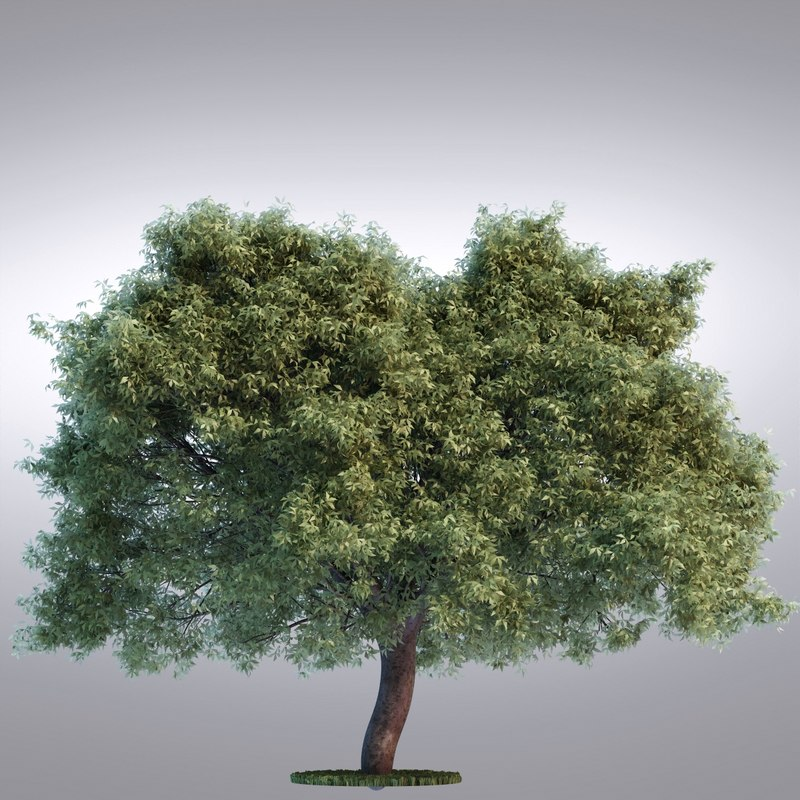 3d model hi realistic series tree