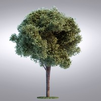 HI Realistic Series Tree - 098