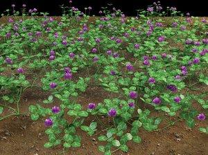 3d trifolium clover