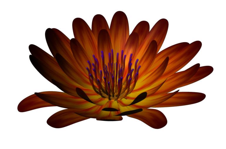 flower animation ma