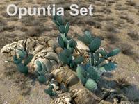 Opuntia Set