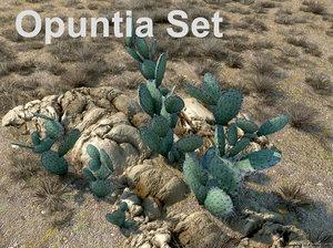 opuntia set max