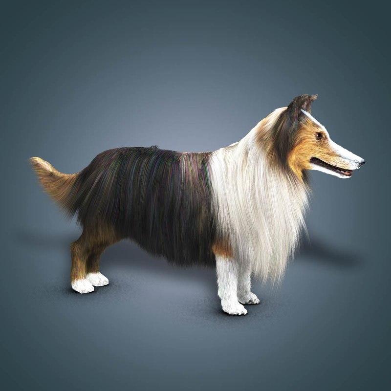 3d model shave collie dog