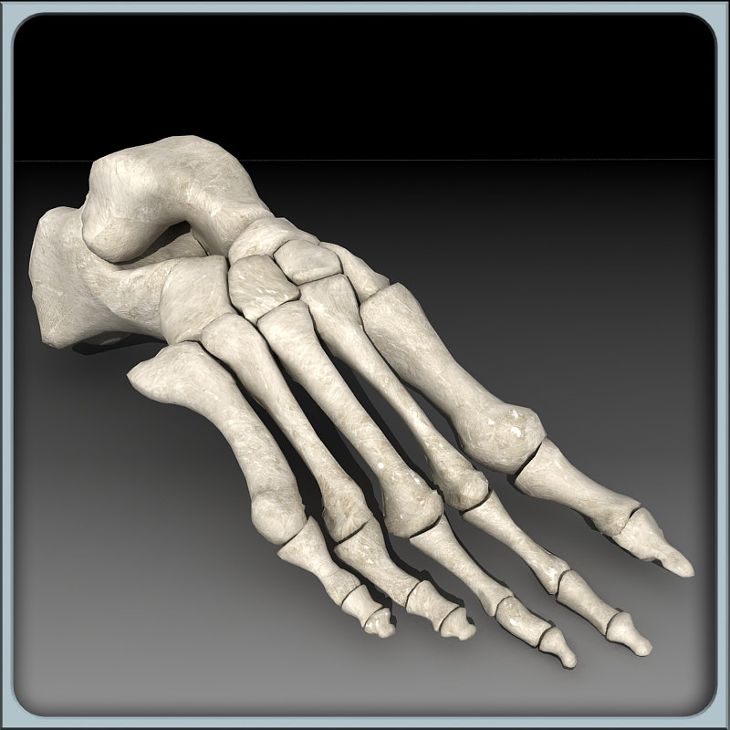 foot skeleton 3ds