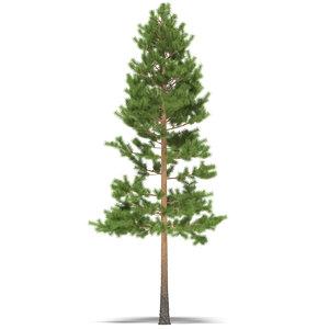 pine max