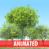 Animated Tree Tilia for Garden Pack Maya Mental Ray 3d studio