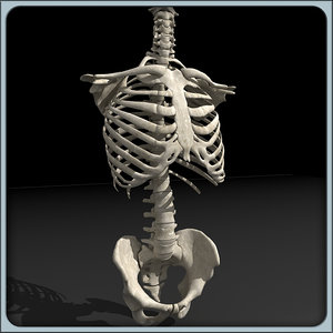 human torso skeleton 3d 3ds