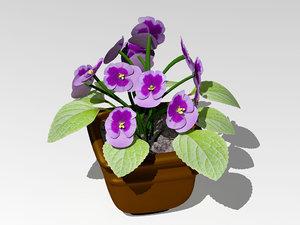 violets flower 3d model
