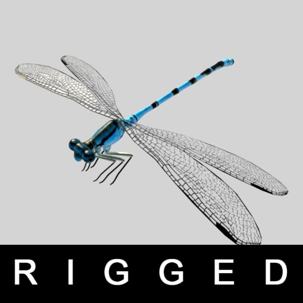 3d model of rigged wings legs