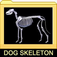 canine skeleton bones 3d model