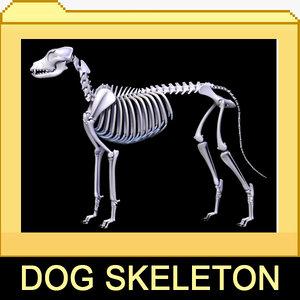 canine skeleton bones 3d model