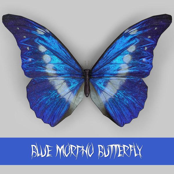 3d morpho blue butterflies model