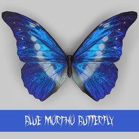 3d morpho blue butterflies model