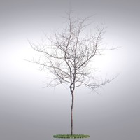 3d model hi realistic series tree