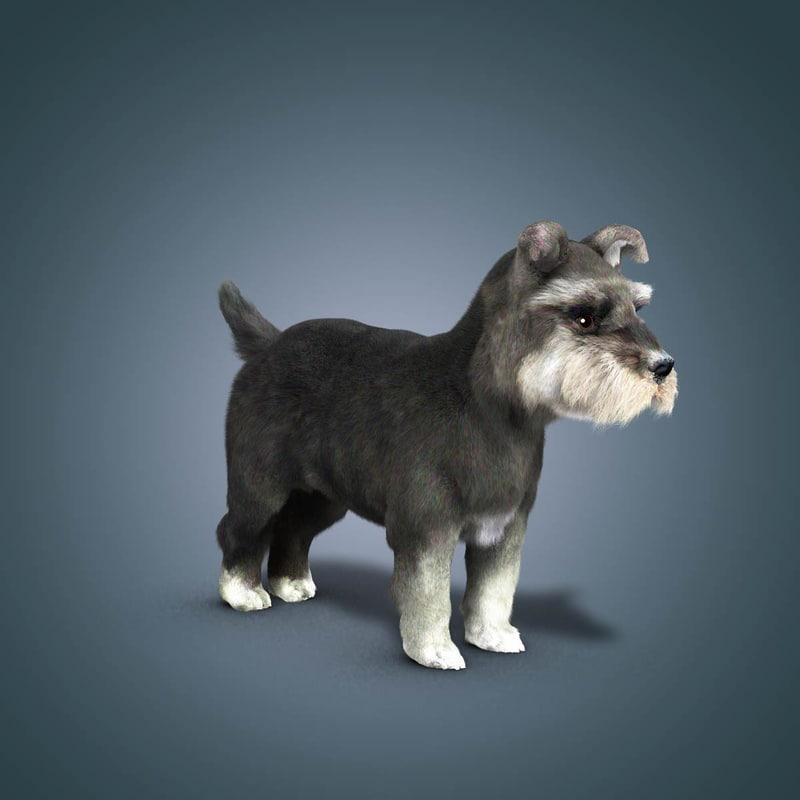 3d animation schnauzer dog model