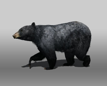 3d black bear animations