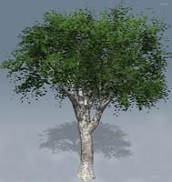 3d pican tree model