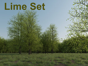 lwo lime tree set