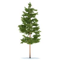 pine 3d max