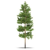 3d pine