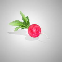 3d model radish