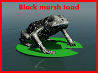 Black marsh toad